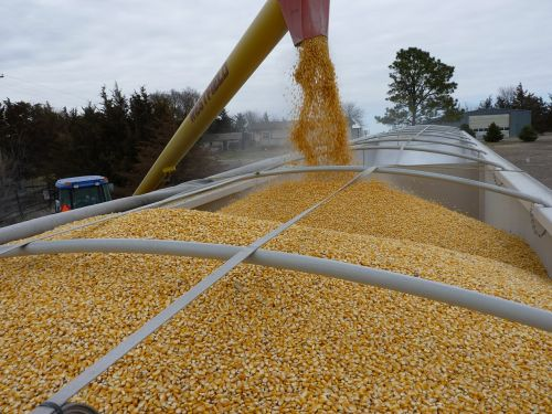 corn agriculture loading