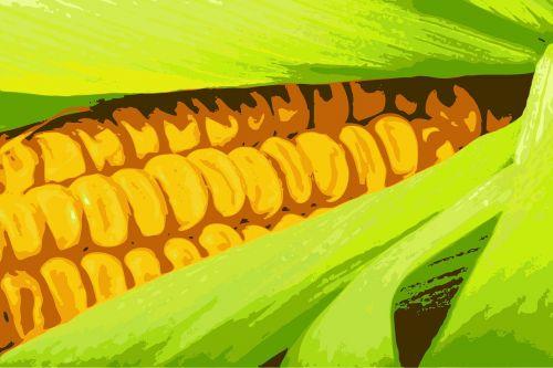 corn sweetcorn sweet corn