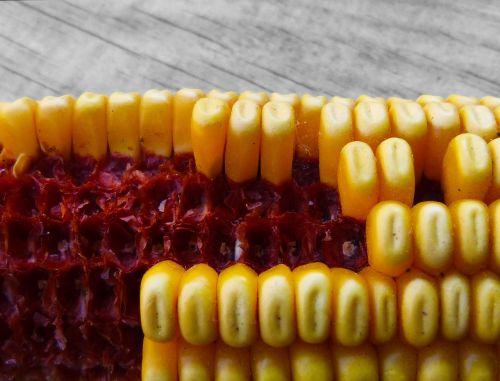 corn panocha contrast