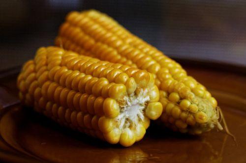 corn on the cob vegetable food