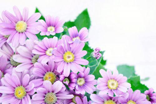 Corner Flowers 5