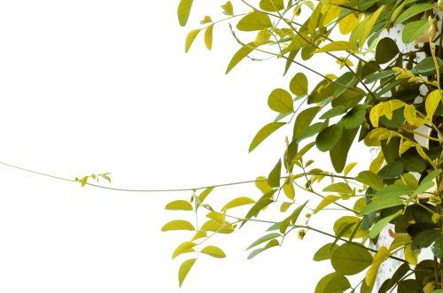Corner Foliage 12