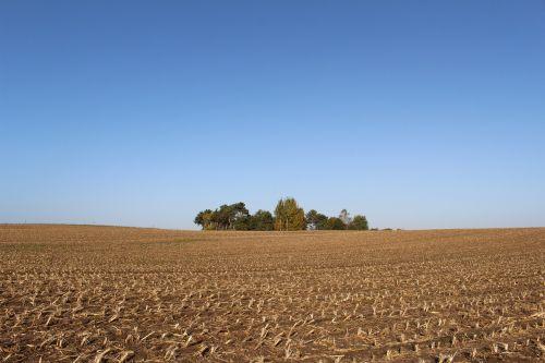 cornfield harvest autumn
