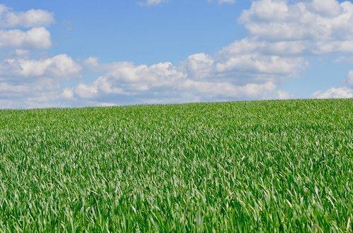 cornfield  sky  clouds