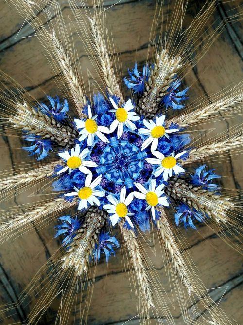 cornflowers chamomile spikes