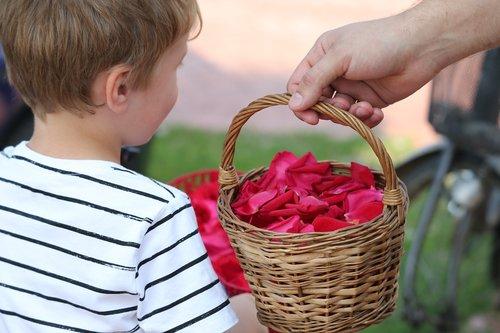 corpus christi feast  boy  red rose petals