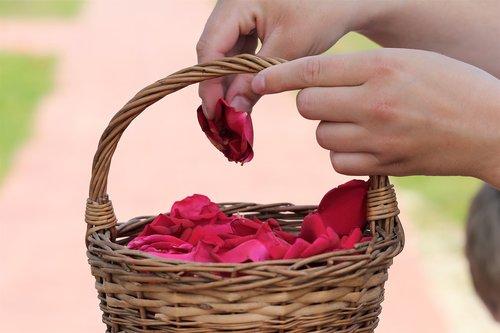 Christbaumkugeln Rose.Corpus Christi Feast Basket Girl Throw Rose Petals