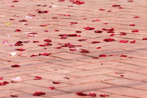 corpus christi feast  rose petals on the floor  procession