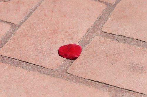 corpus christi feast  red rose petal on the floor  tradition