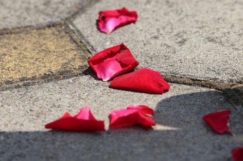 corpus christi feast  red rose petals on the floor  tradition