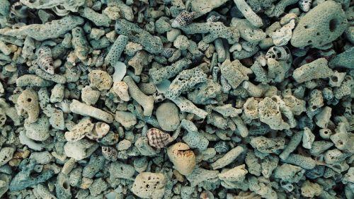 corral beach sand shell