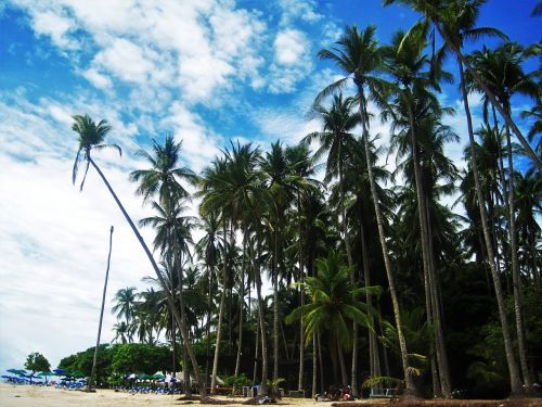 costa rica pacific beach high palm trees