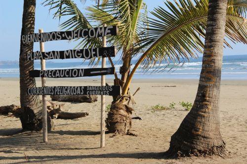 costa rica palm trees tropical
