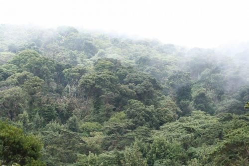 Costa Rica Forest