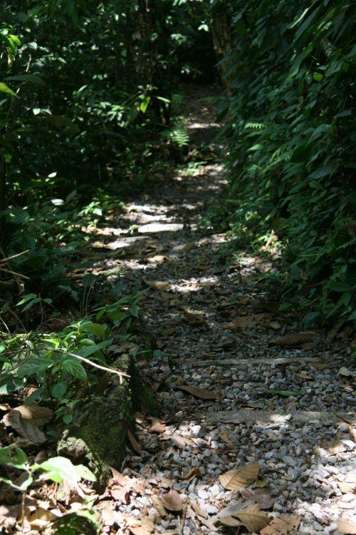 Costa Rica Trail