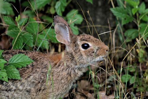 Cottontail Bunny Breakfast