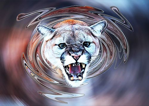 cougar animal art