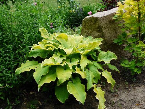 cough garden green