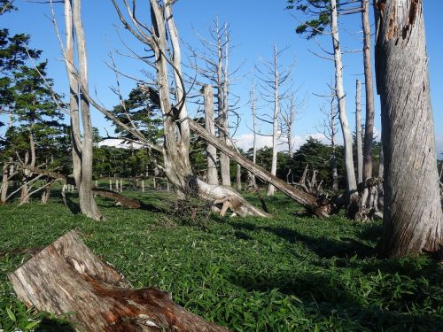 countries like the former soviet union 原山 masaki hara dieback