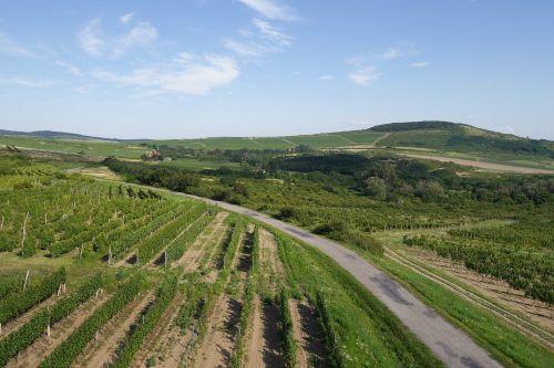 country vineyard tokaj
