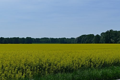 country  nature  field