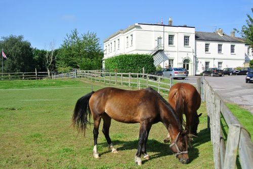 country house horses country