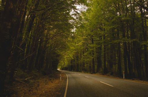 country road forest road
