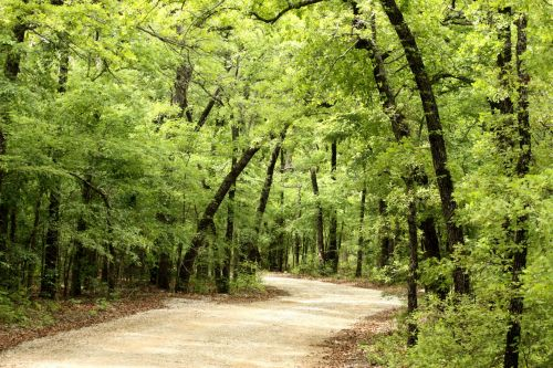Country Trail In Spring