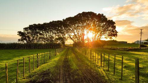 countryside,sunset landscape,landscape,summer,field,farm,sunset,sunlight,outdoor,orange,beautiful landscape,summer landscape,landscapes,beautiful,farm landscape,light,farmland,green,country,pathway,dirt road