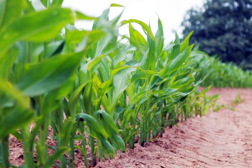 countryside crops dirt