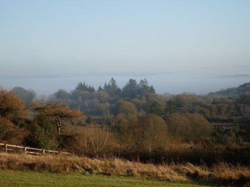 county sligo countryside forest