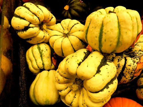 Squash And Zucchini (1)