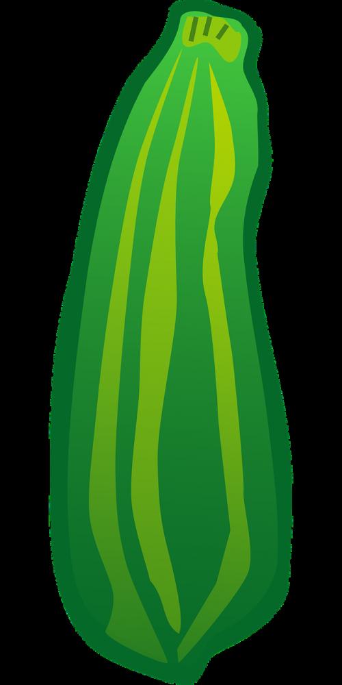 courgette zucchini curcubit