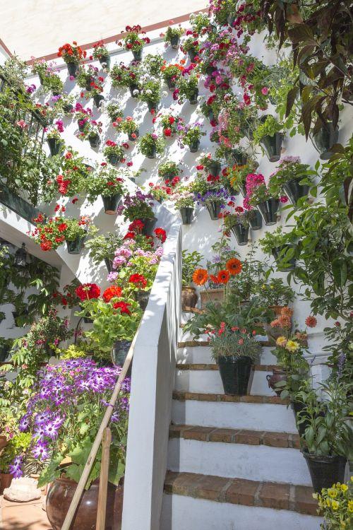 courtyards cordoba patios de córdoba