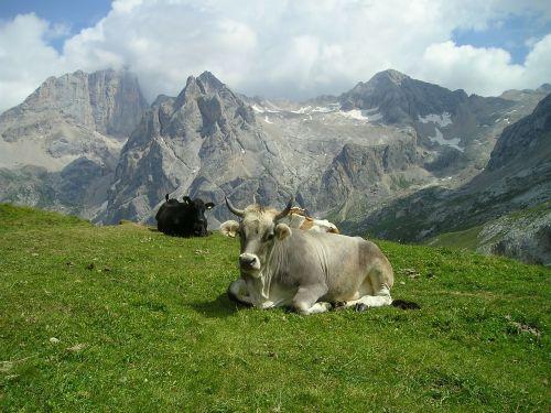 cow pasture horns