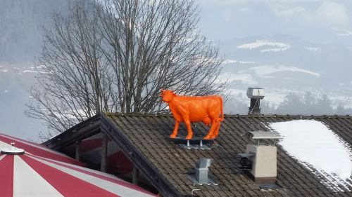 cow roof kitzbühel