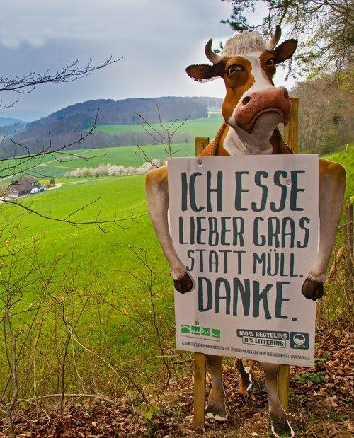 cow  warning sign  warning