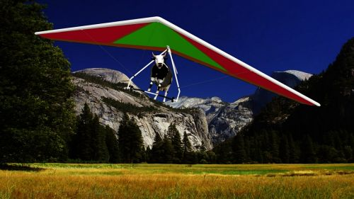 cow hang gliding field