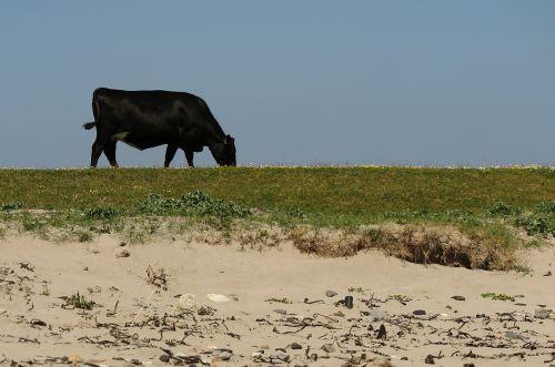 cow beach bed