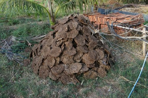 cow dung fuel cow pats