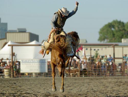 cowboy rodeo horse