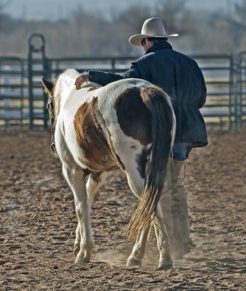 cowboy horse pony