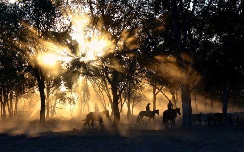 kaubojus,saulės šviesa,medžiai,veisimas,arkliai,arklys,Jodinėjimas,dulkėtas,kaimas,veisimas,Žemdirbystė,gyvenimo būdas,kraštovaizdis,vaizdingas,spinduliai,šviesa,Viktorija,australia,darbo,darbo,žmonės,gyvūnai