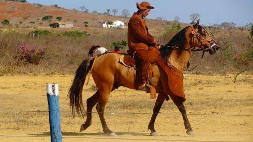 cowboys knight backcountry