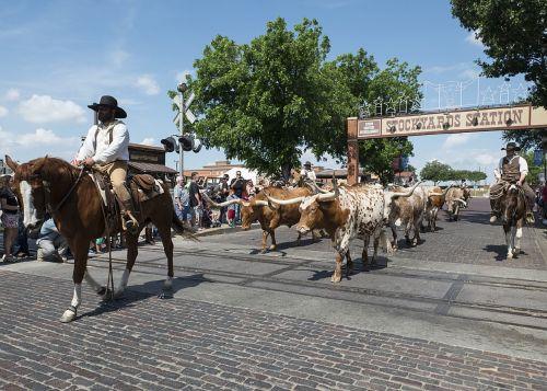 cowboys cattle drive