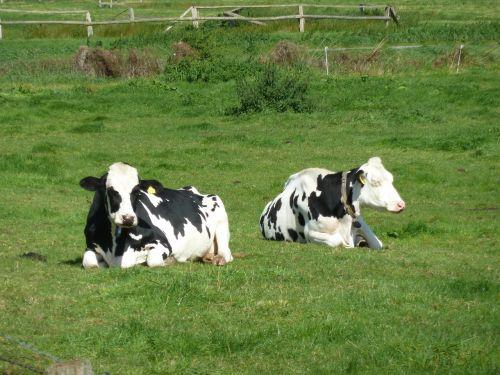 cows pasture concerns