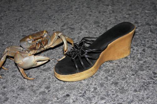 crab funny wildlife