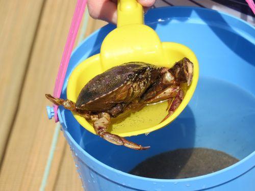crab holiday bucket