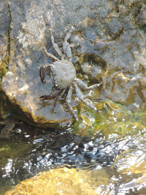 crab water great