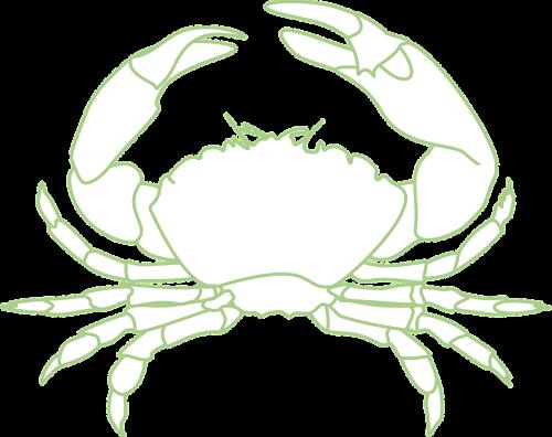 crab crustacean sea life